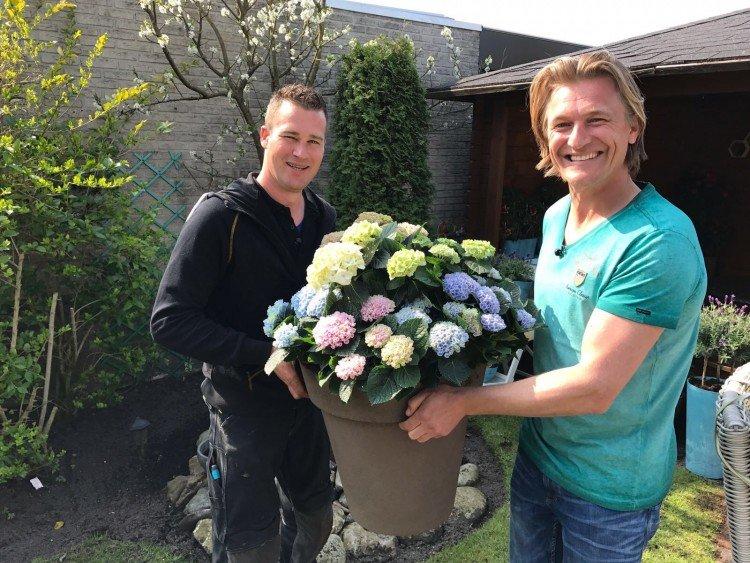 Win een Magical Hortensia met potgrond - PlantPlezier.nl