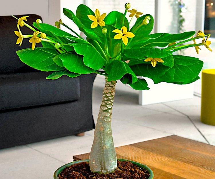 De Hawaiiaanse palm - PlantPlezier.nl