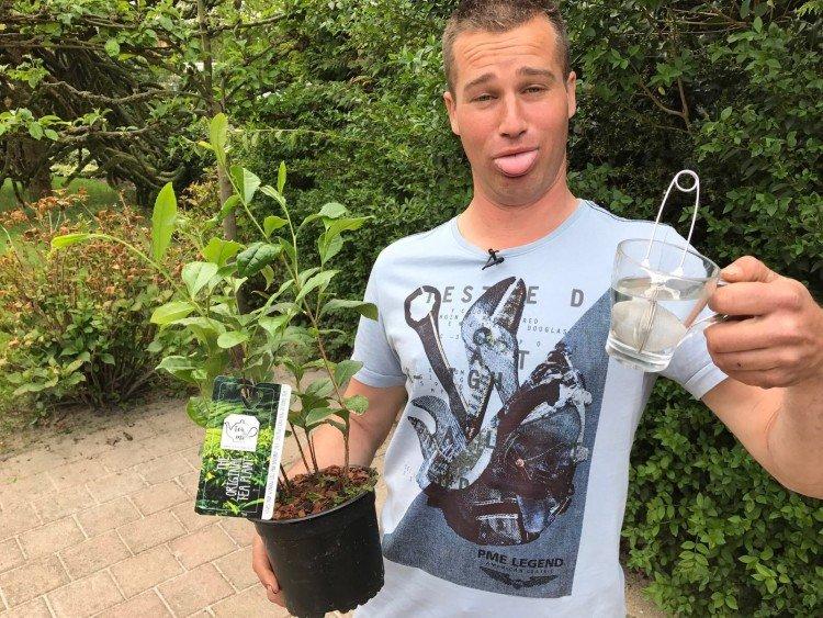 Thee voor iedereen - PlantPlezier.nl