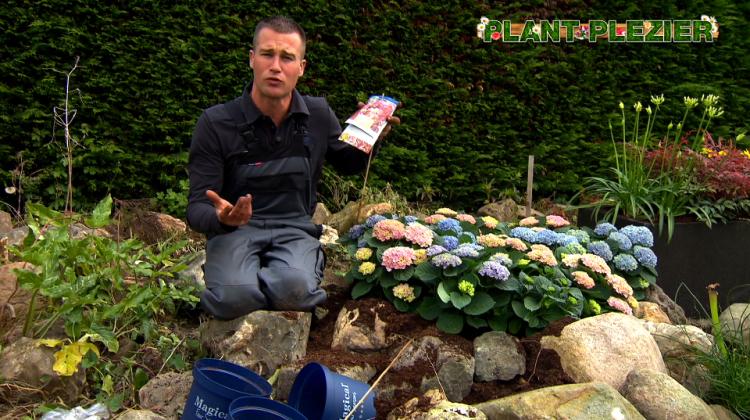Bloeiend de zomer in! - PlantPlezier.nl