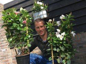 De Mandevilla heeft me aan het denken gezet - PlantPlezier.nl