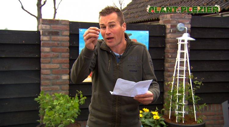 Orchidee met plantjes in plaats van bloemen - PlantPlezier.nl