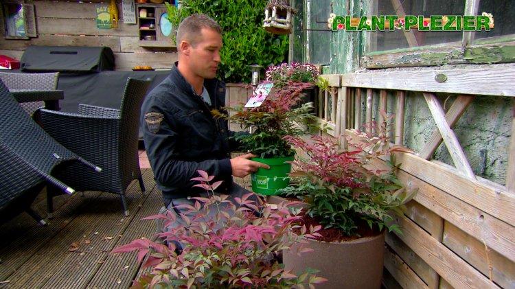 TOPHEESTERS® - PlantPlezier.nl