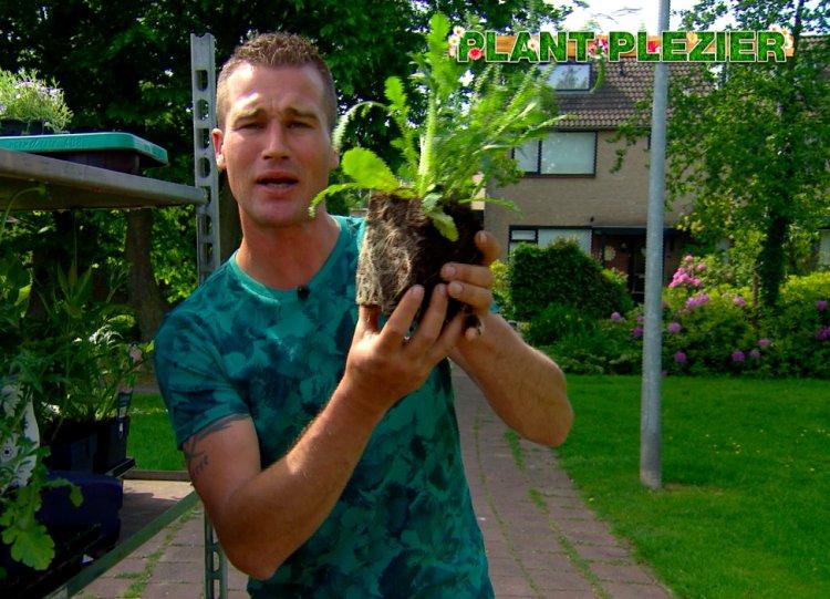 Grotere pot voor vaste planten - PlantPlezier.nl