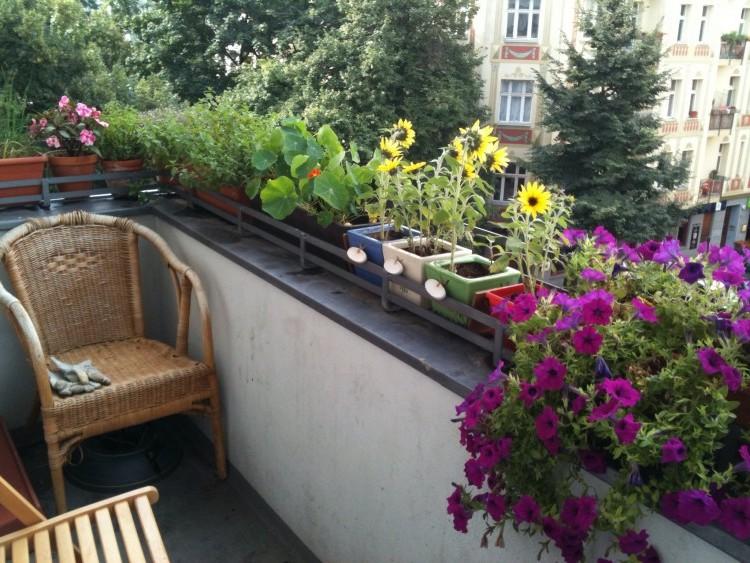 Balkon op het zuiden - PlantPlezier.nl