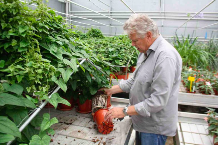 Afvallen? - PlantPlezier.nl