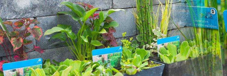 De planten met kikker - PlantPlezier.nl