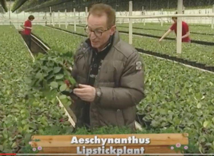 Aeschynanthus Kwekerij Bert Schouten - PlantPlezier.nl